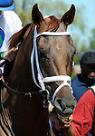 09 September 20: Dance to My Tune prior to the grade 2 Canadian Stakes for fillies and mares three years old and upward at Woodbine Racetrack in Rexdale, Ontario.