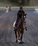 November 2, 2020: Kameko, trained by trainer Andrew M. Balding, exercises in preparation for the Breeders' Cup Mile at Keeneland Racetrack in Lexington, Kentucky on November 2, 2020. Alex Evers/Eclipse Sportswire/Breeders Cup