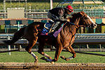 ARCADIA, CA  OCTOBER 25:Breeders' Cup Sprint entrant Catalina Cruiser, trained by John W. Sadler, exercises in preparation for the Breeders' Cup World Championships at Santa Anita Park in Arcadia, California on October 25, 2019. (Photo by Casey Phillips/Eclipse Sportswire/CSM)