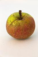 Europe/France/Normandie/Basse-Normandie/50/Batenton: Maison de la Pomme et de la Poire - Exposition de Pommes à Cidre: Variété Clos Saillard // France, Manche, Batenton, House of the Apple and Pear Cider apples Exhibition  Clos Saillard cultivar