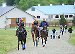 Animal Kingdom, winner of the 137th Kentucky Derby, continues to train for the Preakness at the Fair Hill Training Center on May 13, 2011 in Fair Hill, Maryland.