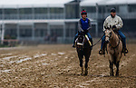 BALTIMORE , MD - MAY 16:  Bravazo with trainer Wayne Lukas jogs over a sloppy track in preparation for the Preakness Stakes at Pimlico Racecourse on May 16, 2018 in Baltimore, Maryland. (Photo by Alex Evers/Eclipse Sportswire/Getty Images)