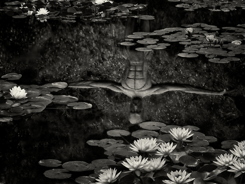 Waterlilies in pond with reflection of sculpture. Oregon