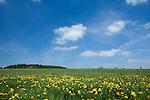 Europa, DEU, Deutschland, Rheinland-Pfalz, Eifel, Vulkaneifel, Reuth, Fruehling, Landschaft, Blauer Himmel, Wolken, Loewenzahn, Bluete, Kategorien und Themen, Natur, Umwelt, Landschaft, Jahreszeiten, Stimmungen, Landschaftsfotografie, Landschaften, Landschaftsphoto, Landschaftsphotographie, Wetter, Himmel, Wolken, Wolkenkunde, Wetterbeobachtung, Wetterelemente, Wetterlage, Wetterkunde, Witterung, Witterungsbedingungen, Wettererscheinungen, Meteorologie, Bauernregeln, Wettervorhersage, Wolkenfotografie, Wetterphaenomene, Wolkenklassifikation, Wolkenbilder, Wolkenfoto<br /> <br /> [Fuer die Nutzung gelten die jeweils gueltigen Allgemeinen Liefer-und Geschaeftsbedingungen. Nutzung nur gegen Verwendungsmeldung und Nachweis. Download der AGB unter http://www.image-box.com oder werden auf Anfrage zugesendet. Freigabe ist vorher erforderlich. Jede Nutzung des Fotos ist honorarpflichtig gemaess derzeit gueltiger MFM Liste - Kontakt, Uwe Schmid-Fotografie, Duisburg, Tel. (+49).2065.677997, archiv@image-box.com, www.image-box.com]