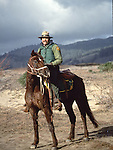 Mounted Police Horses, CA