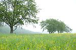 Europa, DEU, Deutschland, Saarland, Tholey, Sotzweiler, Noerdliches Saarland, Typische Landschaft, Regen, Regenwetter, Dunst, Nach dem durchzug einer Gewitterfront, Natur, Umwelt, Landschaft, Jahreszeiten, Stimmungen, Landschaftsfotografie, Landschaften, Landschaftsphoto, Landschaftsphotographie, Wetter, Wetterelemente, Wetterlage, Wetterkunde, Witterung, Witterungsbedingungen, Wettererscheinungen, Meteorologie, Wettervorhersage, Sotzweiler ist ein Ortsteil der Gemeinde Tholey im Saarland mit ca. 1200 Einwohnern und liegt am Fuße des Schaumberges.<br /> <br /> [Fuer die Nutzung gelten die jeweils gueltigen Allgemeinen Liefer-und Geschaeftsbedingungen. Nutzung nur gegen Verwendungsmeldung und Nachweis. Download der AGB unter http://www.image-box.com oder werden auf Anfrage zugesendet. Freigabe ist vorher erforderlich. Jede Nutzung des Fotos ist honorarpflichtig gemaess derzeit gueltiger MFM Liste - Kontakt, Uwe Schmid-Fotografie, Duisburg, Tel. (+49).2065.677997, ..archiv@image-box.com, www.image-box.com]