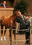 Hip #152 Life At Ten consigned by Three Chimneys Sales sold for $1,950,000 to Adena Springs at the Keeneland November Sale on November 7, 2011.