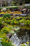Liverwort plants surrounding man made ponds, Boothbay, Maine