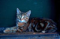 A striped kitten in a box.