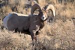 Montana/Wyoming Wildlife Photos