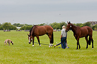 """""""HAPPY PONIES"""" 2012 IRL-Tattersalls International Horse Trial: Tuesday Arrival Day"""