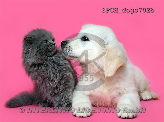 Xavier, ANIMALS, dogs, photos(SPCHdogs702b,#A#) Hunde, perros