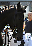 09 September 19: Biofuel prior to the grade 3 Natalma Stakes for two year old fillies at Woodbine Racetrack in Rexdale, Ontario.