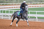 Track Work: February 19 2021: KNICKS GO (USA) Track work from King Abddulaziz Racetrack, Riyadh, Saudi Arabia. Shamela Hanley/Eclipse Sportswire/CSM FEBRUARY 19 2021: The Saudi Cup Preparations.