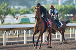 SHA TIN,HONG KONG-DECEMBER 08 : Blond Me ,trained by Andrew Balding,exercises in preparation for the Hong Kong  at Sha Tin Racecourse on December 8,2017 in Sha Tin,New Territories,Hong Kong (Photo by Kaz Ishida/Eclipse Sportswire/Getty Images)