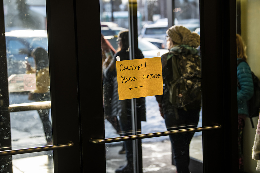 A young moose causes a stir in UAA's Eugene Short Hall by laying down to rest by the front door as students transit between classes.
