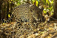 Pantanal Sep19