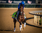 LOUISVILLE, KY - MAY 02: Thunder Snow gallops in preparation for the Kentucky Derby at Churchill Downs on May 02, 2017 in Louisville, Kentucky. (Photo by Alex Evers/Eclipse Sportswire/Getty Images)