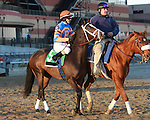 Notacatbutallama post parade.  Favorite Vyjack with Cornelio Velasquez holds off 41 - 1 longshot Siete de Oros to win143rd running of the Grade II Jerome Stakes for 3-year olds, going 1 mile 70 yards on the inner dirt, at Aqueduct Racetrack.  Trainer Rudy Rodriguez.  Owner Pick Six Racing **