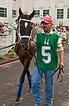 25 May 2009 : Dubai Majesty walks the paddock before the 6th running of the G3 Winning Colors stakes at Churchill Downs in Louisville, Kentucky.