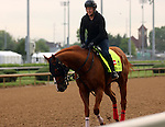 LOUISVILLE, KY - APRIL 27: Whitmore (Pleasantly Perfect x Melody's Song, by Scat Daddy) gallops on track with exercise rider Laura Moquett at Churchill Downs in preparation for the Kentucky Derby. Owner Robert V. LaPenta, Harry T. Rosenblum, and Southern Springs Stables. (Photo by Mary M. Meek/Eclipse Sportswire/Getty Images)