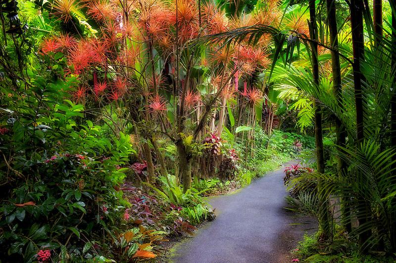 Pathway in Hawaii Tropical Botanical Gardens. Hawaii, The Big Island.