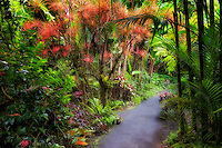 Pathway in Hawaii Tropical Botanical Gardens. Hawaii, The Big Island.