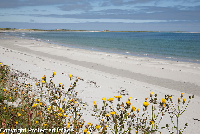 Bay of Lopness Beach, Isle of Sanday, Orkney Islands, Scotland
