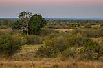 Savanna, Kafue National Park, Zambia
