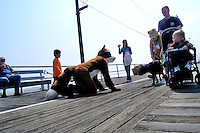 Foxwell Foxcoon and Lilpup interact with a family on the boardwalk in Ocean City, New Jersey.   Furries are a group of people who identify themselves not as being human but as a walking, talking animal.  For some the lifestyle is complete, animal traits reach into every aspect of life from mundane trips to a grocery store to sexual fantasies.  For others, involvement in the furry fandom is limited to public performances and meet-and-greets.