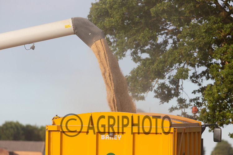 Harvesting Winter Barley in the Lincolnshire fens<br /> ©Tim Scrivener Photographer 07850 303986<br />      ....Covering Agriculture In The UK....
