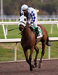 30 January 2010: Ballonenostrikes and jockey Jeremy Rose after the Sunshine Millions Turf Stakes at Gulfstream Park in Hallandale Beach, FL.