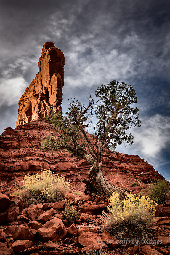 A juniper tree beneath a towering sandstone fin in Valley of the Gods in southeasterb Utah