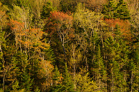 Mixed hardwood forest in spring in the Adirondack State Park in New York State