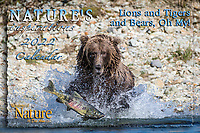 """2022 Nature's Inspirations Calendar """"Lions and Tigers and Bears, Oh My!"""""""