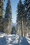 Oesterreich, Salzburger Land, Pongau, bei Obertauern: Winterwanderweg im Skilanglaufgebiet rund um die Gnadenalm | Austria, Salzburger Land, Pongau, near Obertauern: winter footpath through cross-country ski area at Gnadenalm