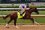 LOUISVILLE, KY - APRIL 23: Fellowship (Awesome of Course x Go Girlfriend Go, by Demidoff) breezes 5 furlongs in 1:00.4 with exercise rider Brian O'Leary at Churchill Downs, Louisville KY. Owner Jacks or Better Farm Inc., trainer Mark Casse.(Photo by Mary M. Meek/Eclipse Sportswire/Getty Images)