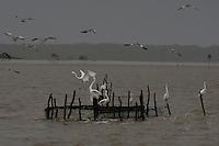 Pescadores artesanais trabalham no litoral do Pará, onde a Amazônia encontra o mar utilizando o espinhel (armadilha com grande número de anzóis), na praia do Paxicú na Reserva Extrativista Marinha Mãe Grande de Curuçá  situada no município de Curuçá (PA), na Região do Salgado, no nordeste do Pará, que abrange aproximadamente 37 mil hectares de estuário - região onde as águas de rios interagem com o oceano - e é povoada por famílias de cerca de seis mil pescadores, divididas em 49 pequenas comunidades instaladas em ilhas, furos, rios e praias da região<br /> Curuça, Pará, Brasil<br /> Foto Paulo Santos <br /> 02/2010
