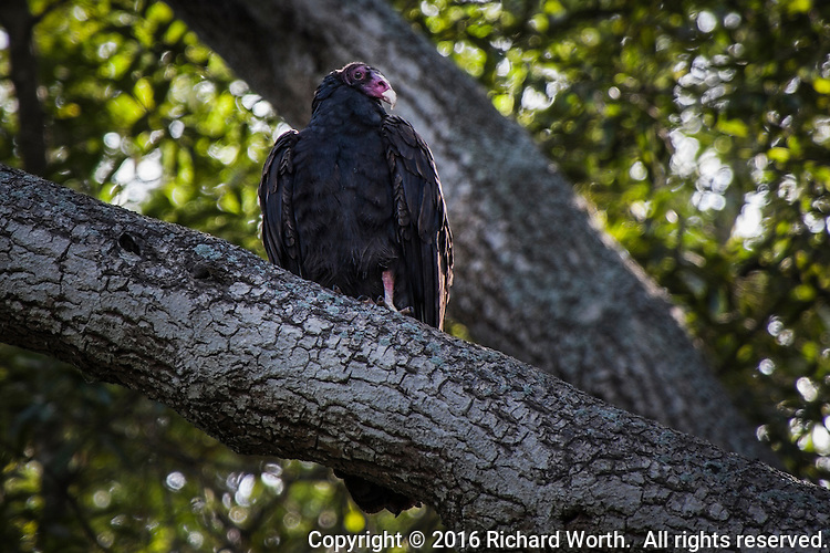 A longer shutter speed and high ISO reveal a Turkey vulture perched in the shadows, almost invisible, eyeing the trail and folks passing by.