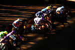 Horses break from the gate at Del Mar Race Course in Del Mar, California on September 02, 2012.