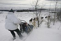 Melanie Gould's team takes a tight turn next to a willow bush on a ridge just outside Unalakleet.  This is a new route into the checkpoint as the old trail had too much overflow on it.   2005 Iditarod Trail Sled Dog Race.