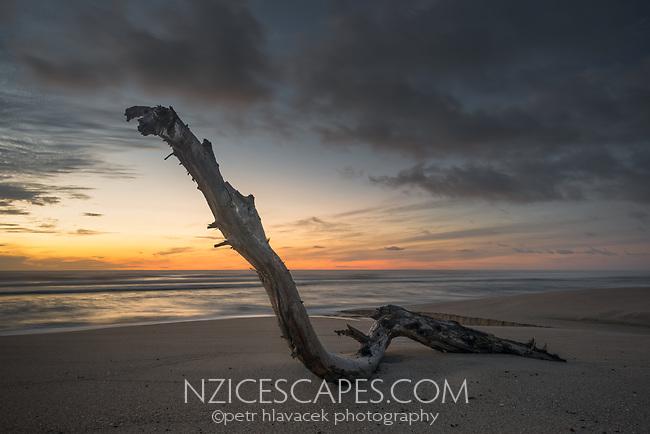 Dawn on beach with driftwood near Karamea, Kahurangi National Park, Buller Region, West Coast, New Zealand, NZ