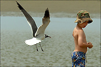 A young boy (model released) watches as a sea gull flies close to where he is standing on the beach. Photo taken on Sullivan's Island, near Charleston, South Carolina beach on the Atlantic Ocean, but could represent a beach scene anywhere.