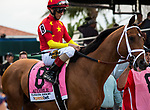 HALLANDALE BEACH, FL - March 31: Audible, #8, parades onto the track for the Grade I Xpressbet Florida Derby at Gulfstream Park on March 31, 2018 in Hallandale Beach, FL. (Photo by Carson Dennis/Eclipse Sportswire/Getty Images.)