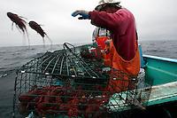 Lobsters season. Baja, Mexico