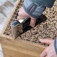 Schilf-Nisthilfe, Nisthilfe aus Schilf, Schilfhalm, Schilfhalmen, Schilfmatte wird mit einer scharfen Gartenschere in Streifen zerschnitten und anschließend werden die Schilfhalm-Rollen in eine Holzkiste, Kiste gefüllt. Schritt 3:  in einem Abstand von etwa 5 cm wird ein Drahtgitter befestigt. Wildbienen-Nisthilfen, Wildbienen-Nisthilfe selbermachen, selber machen, Wildbienenhotel, Insektenhotel, Wildbienen-Hotel, Insekten-Hotel