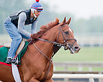 Animal Kingdom (left), winner of the 137th Kentucky Derby, runs through a morning mist as he continues to train for the Preakness at the Fair Hill Training Center on May 14, 2011 in Fair Hill, Maryland.