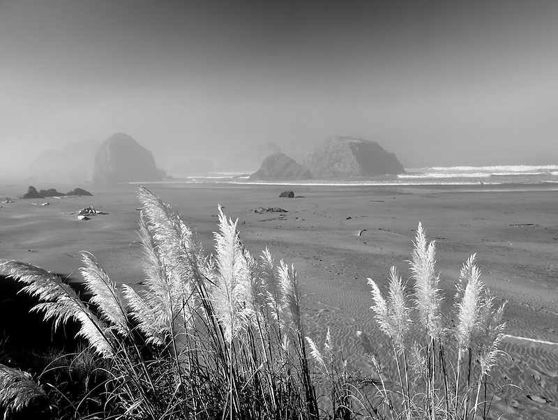 S00098M.tiff   Pampas Grass and beach at Cape Sabastian State Park, Oregon