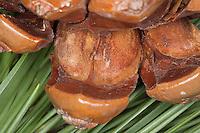 Pinienkern, Pinienkerne, Pignole, Pignoli, Pinien-Kern, essbare Kerne in Zapfen, Pinie, Schirmkiefer, Schirm-Kiefer, Pinienzapfen, Kiefer, Pinus pinea, Stone Pine, Umbrella Pine, Pine nuts are the edible seeds of pines, Pine nut, Pine-nut
