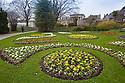 22/03/15  <br /> <br /> Primulas in the spring sunshine at Sheffield Botanical Gardens.<br /> <br /> All Rights Reserved - F Stop Press.  www.fstoppress.com. Tel: +44 (0)1335 418629 +44(0)7765 242650